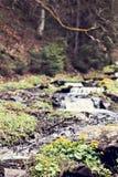 μικρός καταρράκτης Ποταμός βουνών Carpathians Στοκ φωτογραφίες με δικαίωμα ελεύθερης χρήσης