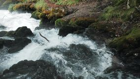 Μικρός καταρράκτης που ρέει κάτω από τους βράχους, ποταμός βουνών που οργίζονται μεταξύ των βράχων στα δασικά, καυκάσια βουνά, Ευ φιλμ μικρού μήκους