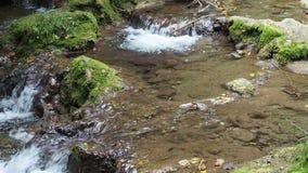 Μικρός καταρράκτης στο δασικό καθαρό καταρράκτη γλυκού νερού φιλμ μικρού μήκους