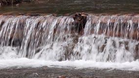 Μικρός καταρράκτης του καθαρού ήρεμου ποταμού βουνών με τις δασώδεις τράπεζες απόθεμα βίντεο