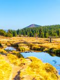 Μικρός κολπίσκος βουνών που ελίσσονται στο μέσο των λιβαδιών και της δασικής ηλιόλουστης ημέρας με το μπλε ουρανό και άσπρα σύννε στοκ εικόνες