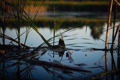 Μικρός κόσμος - φύση Στοκ Εικόνες