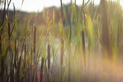 Μικρός κόσμος - φύση Στοκ εικόνα με δικαίωμα ελεύθερης χρήσης