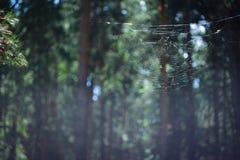 Μικρός κόσμος - φύση Στοκ εικόνες με δικαίωμα ελεύθερης χρήσης