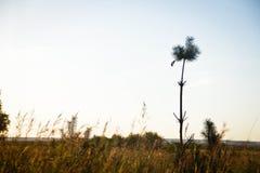 Μικρός κόσμος - φύση Στοκ φωτογραφία με δικαίωμα ελεύθερης χρήσης