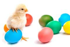 Μικρός νεοσσός με τα αυγά Πάσχας απομονωμένος Στοκ Φωτογραφία