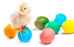 Μικρός νεοσσός με τα αυγά Πάσχας απομονωμένος Στοκ φωτογραφία με δικαίωμα ελεύθερης χρήσης