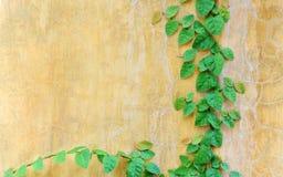 Μικρός ορειβάτης φύλλων στον εκλεκτής ποιότητας τοίχο Στοκ Φωτογραφία