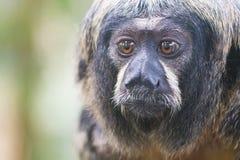 Μικρός πίθηκος, εκλεκτική εστίαση Στοκ φωτογραφία με δικαίωμα ελεύθερης χρήσης