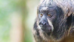 Μικρός πίθηκος, εκλεκτική εστίαση Στοκ φωτογραφίες με δικαίωμα ελεύθερης χρήσης