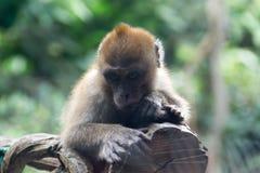 Μικρός πίθηκος που στηρίζεται σε έναν κλάδο δέντρων Στοκ Φωτογραφία