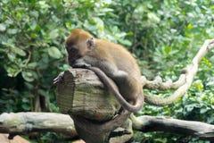 Μικρός πίθηκος που στηρίζεται σε έναν κλάδο δέντρων Στοκ εικόνα με δικαίωμα ελεύθερης χρήσης