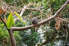 Μικρός πίθηκος σε ένα δέντρο Στοκ φωτογραφία με δικαίωμα ελεύθερης χρήσης