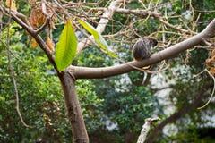 Μικρός πίθηκος σε ένα δέντρο Στοκ εικόνες με δικαίωμα ελεύθερης χρήσης
