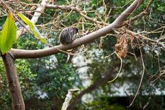 Μικρός πίθηκος σε ένα δέντρο Στοκ Εικόνες