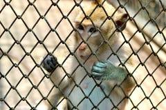 Μικρός πίθηκος στο ζωολογικό κήπο Στοκ Εικόνες
