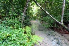Μικρός ποταμός που ρέει σε όλη την πολύ πράσινη ζούγκλα Στοκ Εικόνες