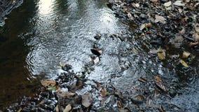 Μικρός ποταμός στη ζούγκλα