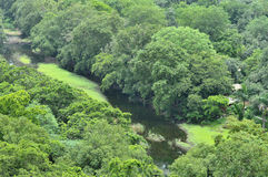 Μικρός ποταμός στη μέση του δάσους πόλο στοκ φωτογραφία με δικαίωμα ελεύθερης χρήσης