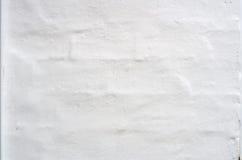 μικρός τοίχος σύστασης φυτών ανασκόπησης Άσπρο φυσικό σχέδιο ασβεστοκονιάματος Στοκ Εικόνα