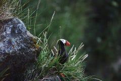 μικρός τροπικός πουλιών Στοκ Φωτογραφίες