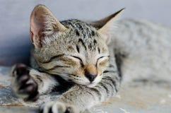 Μικρός ύπνος γατακιών Στοκ Εικόνες