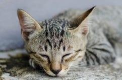 Μικρός ύπνος γατακιών Στοκ Εικόνα