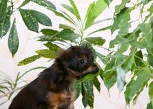 Μικρός redhead με ένα μαύρο κουτάβι τρώει τα φύλλα των φυτών Στοκ φωτογραφία με δικαίωμα ελεύθερης χρήσης