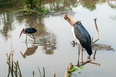 δωρεάν μεγάλα πουλιά βίντεο