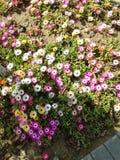 μικρό άνθος λουλουδιών Στοκ Εικόνες