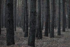μικρό δάσος ποταμών λουλουδιών βραδιού ανθών κωνοφόρο Στοκ φωτογραφία με δικαίωμα ελεύθερης χρήσης