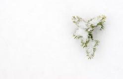 Μικρό έλατο στο χιόνι Στοκ Φωτογραφίες