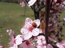 Μικρό έντομο στο δέντρο άνοιξη στοκ φωτογραφίες