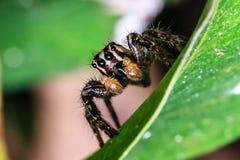 Μικρό έντομο Στοκ εικόνες με δικαίωμα ελεύθερης χρήσης