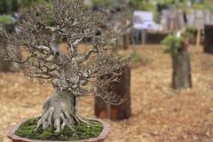 Μικρό δέντρο μπονσάι σε ένα κεραμικό δοχείο και ένα καφετί υπόβαθρο φύλλων Στοκ Εικόνα