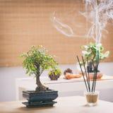 μικρό δέντρο μπονσάι Στοκ φωτογραφία με δικαίωμα ελεύθερης χρήσης