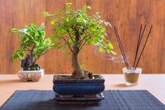 μικρό δέντρο μπονσάι Στοκ Φωτογραφία