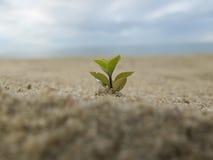 Μικρό δέντρο στην άμμο Στοκ φωτογραφίες με δικαίωμα ελεύθερης χρήσης