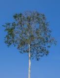 μικρό δέντρο Στοκ Εικόνα