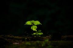 μικρό δέντρο στοκ φωτογραφίες με δικαίωμα ελεύθερης χρήσης