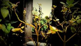 μικρό δέντρο Στοκ Φωτογραφίες