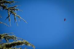 Μικρό αεροπλάνο στον ουρανό Στοκ φωτογραφία με δικαίωμα ελεύθερης χρήσης
