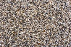 Μικρό αμμοχάλικο στην παραλία στοκ φωτογραφία