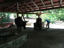Μικρό από την Κόστα Ρίκα αγρόκτημα Στοκ εικόνες με δικαίωμα ελεύθερης χρήσης
