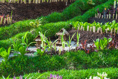 Μικρό βόρειο ταϊλανδικό πρότυπο σπιτιών στον κήπο, φυσική αγροτική έννοια σπιτιών Στοκ Εικόνες