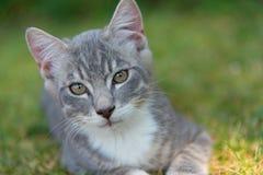 Μικρό γατάκι γατών που στηρίζεται στην πράσινη χλόη Στοκ Φωτογραφίες