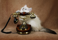 Μικρό γατάκι με το αναδρομικό τηλέφωνο στοκ εικόνα