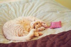 Μικρό γατάκι με το κόκκινο μαξιλάρι Στοκ φωτογραφία με δικαίωμα ελεύθερης χρήσης