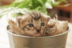 Μικρό γατάκι νυσταλέο στον κάδο στοκ εικόνες