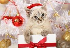 Μικρό γατάκι σε ένα καπέλο Άγιου Βασίλη με ένα δώρο στοκ φωτογραφίες